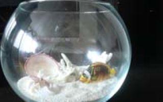 Украшение интерьера из старого аквариума