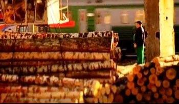 Березовые бревна – сырье для производства фанеры