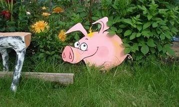 Свин на участке